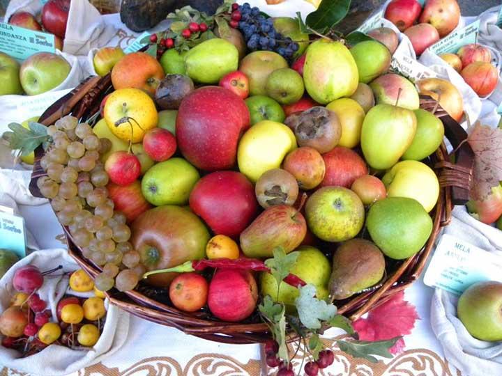 Frutti antichi - Il Sorbo Vivai