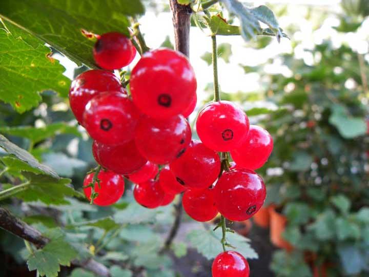 """Frutti di bosco - Vivaio """"Il Sorbo"""""""