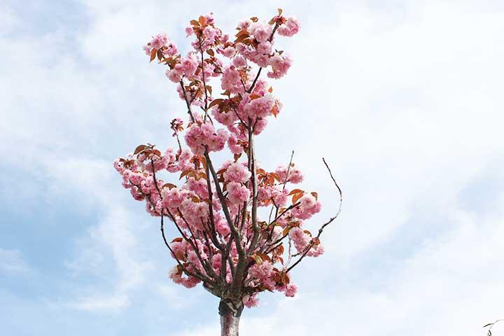 Vendita alberi da frutto Pesaro-Urbino