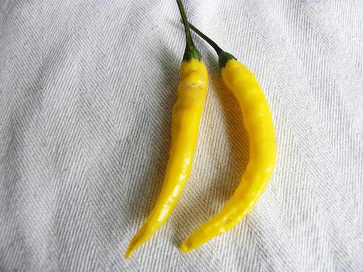 Peperoncino Cayenna giallo - 20.000-25.000 scoville