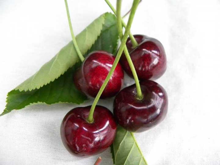 Pianta di ciliegia