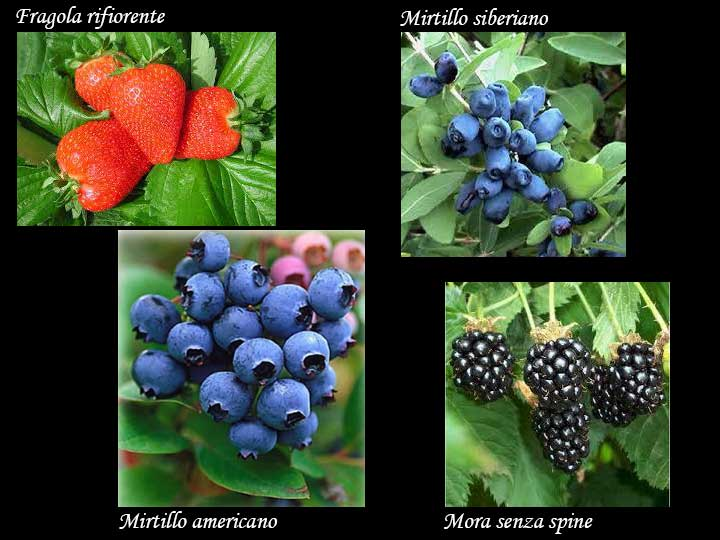 fragole - mirtilli - more