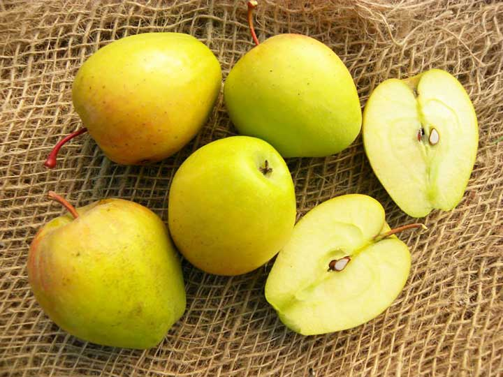 pianta di mela cuzza online