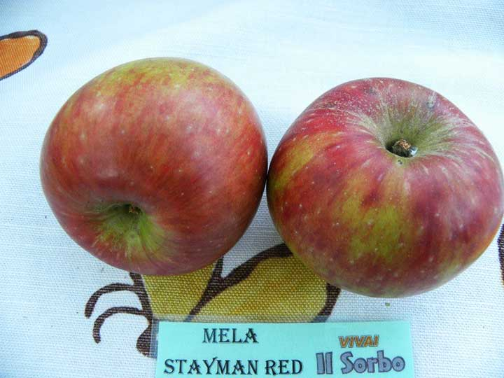Mela stayman red