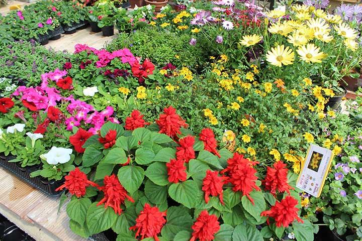 Piante da giardino ornamentali il sorbo vivai di antonio santini - Piante da giardino profumate ...