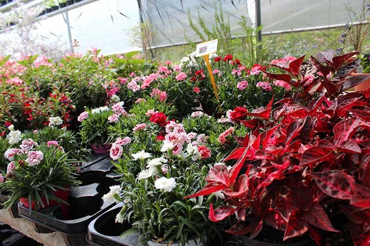 """Vivai """"Il Sorbo"""" - vendita piante da giardino"""