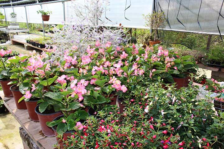 Piante da giardino ornamentali il sorbo vivai di for Vendita piante da giardino