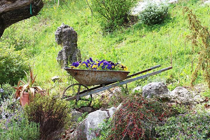 "Vivai ""Il Sorbo"" - vendita piante da giardino - violette"
