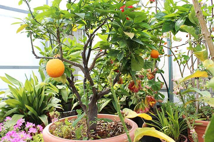 piante da giardino ornamentali il sorbo vivai di