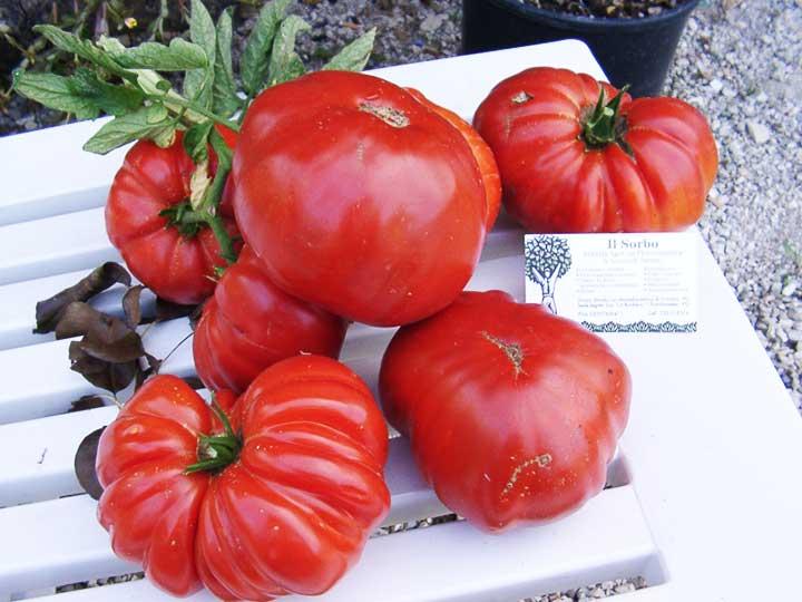 Pomodoro gigante special