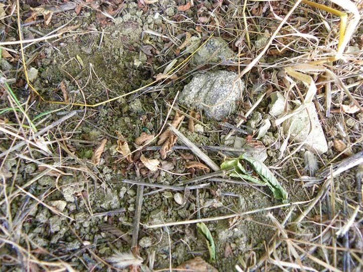 Tartufigene il sorbo vivai di antonio santini for Vendita piante esotiche