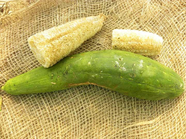 """Zucca ornamentale """"spugna"""" o """"luffa"""""""