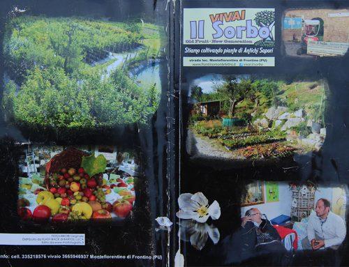 """""""Stiamo coltivando piante di antichi sapori"""""""