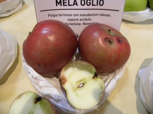 mela-olio-2