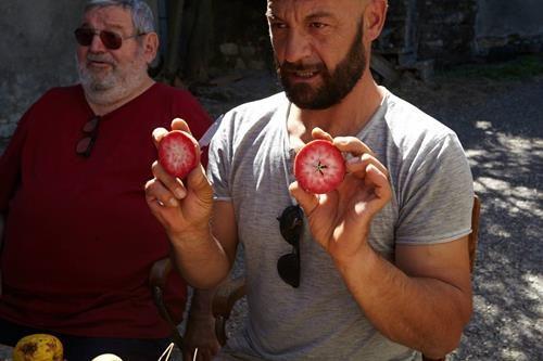 pianta di mela polpa rossa o cocomerina online