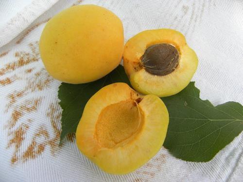 pianta di albicocca boccuccia online il sorbo