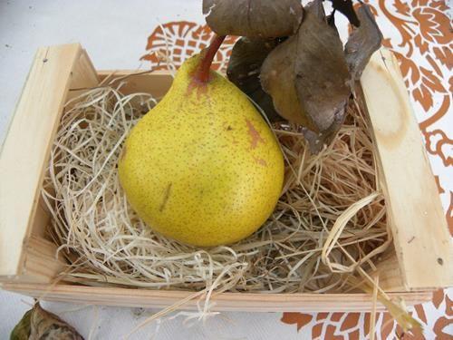 Pianta di pera grigia online