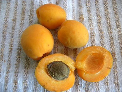 pianta di albicocca bergeron online il sorbo