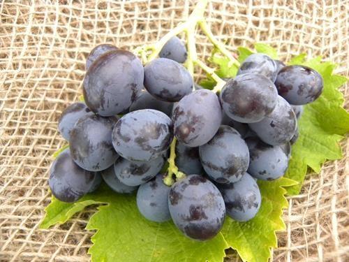 Pianta di uva da tavola archivi pagina 2 di 2 il sorbo - Vivai rauscedo uva da tavola ...