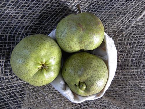 Pianta di pera olivier de serres online