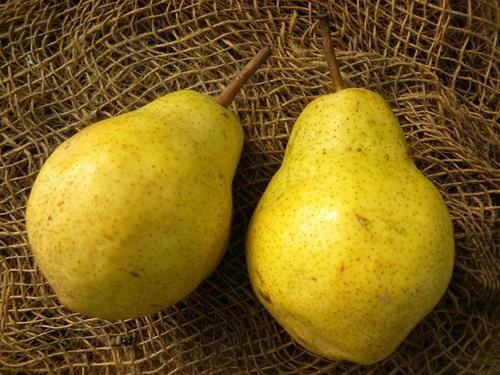 Pianta di pera william online il sorbo