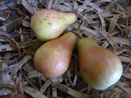 Pianta di pera san giovanni online il sorbo