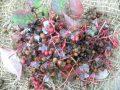 Pianta di pepe giapponese < zanthoxylum piperitum > online vivai il sorbo